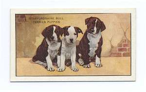 1936 STAFFORDSHIRE BULL TERRIER PUPS GALLAHER Ltd DOG CIGARETTE