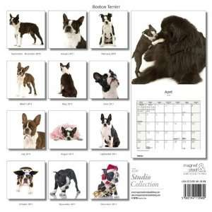 Magnet & Steel Limited 3927 Boston Terrier