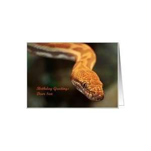 Birthday Son   Animal Reptile Python Snake Card Toys & Games